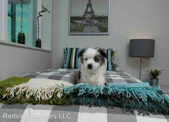 Queen Anne Garden Apartments For Rent 1250 5th Ave N Seattle Wa 98109 Zumper